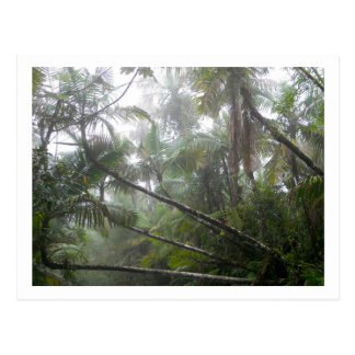 Tropical Plants at El Yunque National Rainforest Postcard
