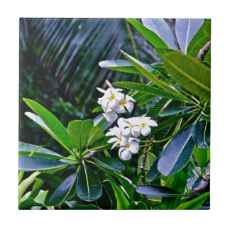 Tropical Plumeria Flowers Ceramic Tiles