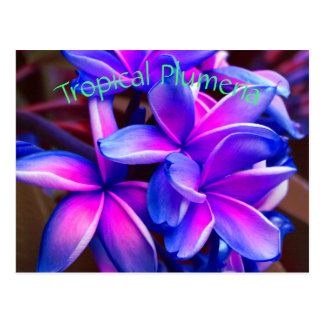 Tropical Plumeria Postcard