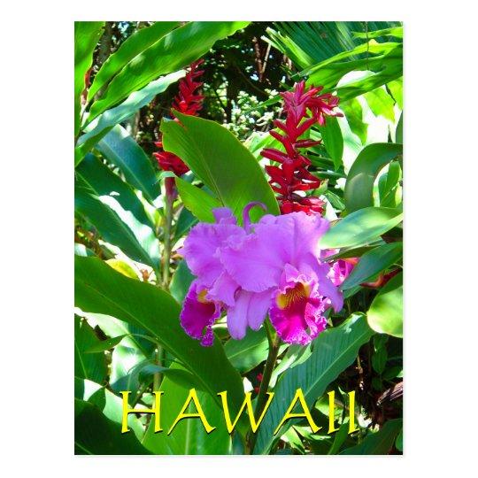 Tropical Purple Hawaiian Flower Postcard