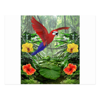 Tropical Rain Forest Postcard