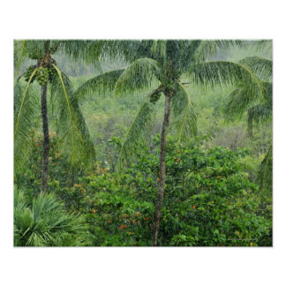Tropical rainforest 2 poster