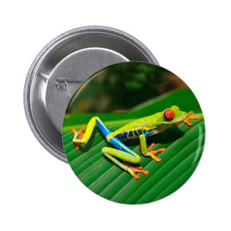 Tropical rainforest green red-eyed tree Frog 2 Inch Round Button