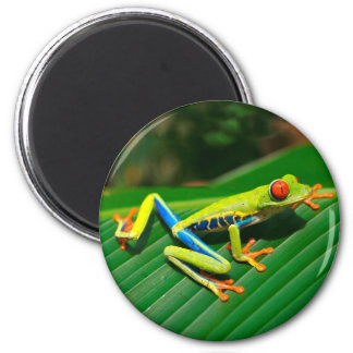 Tropical rainforest green red-eyed tree Frog 2 Inch Round Magnet
