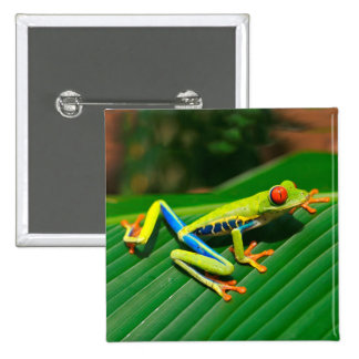 Tropical rainforest green red-eyed tree Frog 2 Inch Square Button