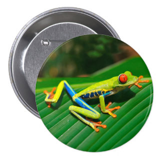 Tropical rainforest green red-eyed tree Frog 3 Inch Round Button