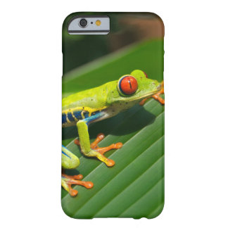 Tropical rainforest green red-eyed tree Frog Barely There iPhone 6 Case