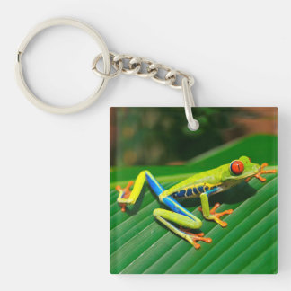 Tropical rainforest green red-eyed tree Frog Double-Sided Square Acrylic Keychain