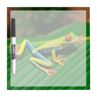 Tropical rainforest green red-eyed tree Frog Dry Erase Board