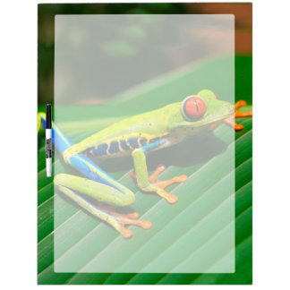 Tropical rainforest green red-eyed tree Frog Dry-Erase Whiteboards