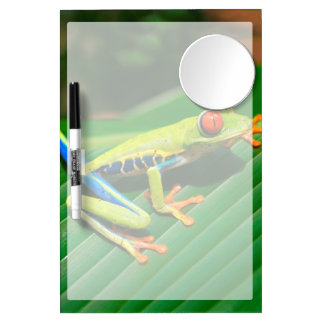 Tropical rainforest green red-eyed tree Frog Dry Erase Whiteboards