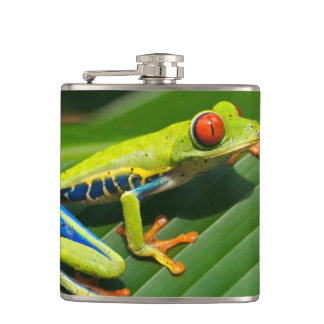 Tropical rainforest green red-eyed tree Frog Flask
