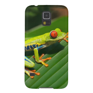 Tropical rainforest green red-eyed tree Frog Galaxy S5 Case