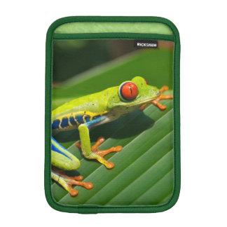 Tropical rainforest green red-eyed tree Frog iPad Mini Sleeve