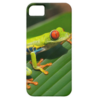 Tropical rainforest green red-eyed tree Frog iPhone 5 Cases