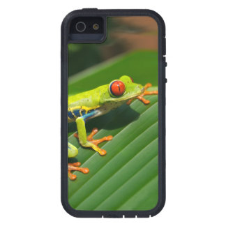 Tropical rainforest green red-eyed tree Frog iPhone 5 Cover