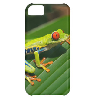 Tropical rainforest green red-eyed tree Frog iPhone 5C Cover
