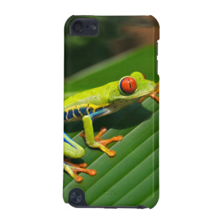 Tropical rainforest green red-eyed tree Frog iPod Touch (5th Generation) Covers