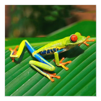 Tropical rainforest green red-eyed tree Frog Magnetic Invitations