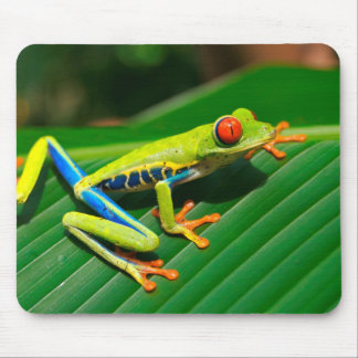 Tropical rainforest green red-eyed tree Frog Mouse Pad