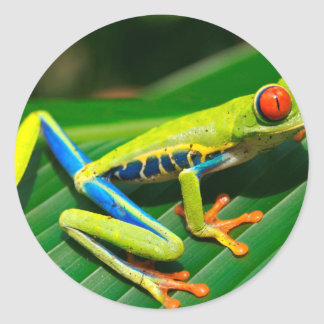 Tropical rainforest green red-eyed tree Frog Round Sticker