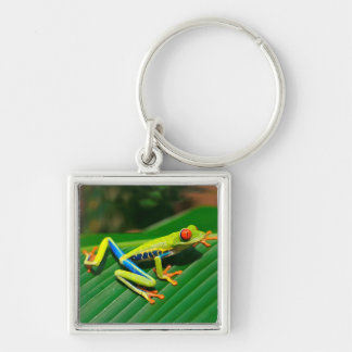 Tropical rainforest green red-eyed tree Frog Silver-Colored Square Keychain