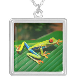 Tropical rainforest green red-eyed tree Frog Silver Plated Necklace