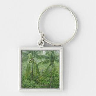Tropical rainforest keychain