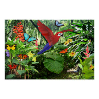 Tropical Rainforest Poster