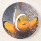 Tropical reef fish - Clownfish Coaster