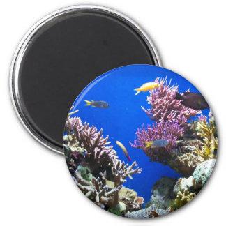 Tropical Reef Magnet