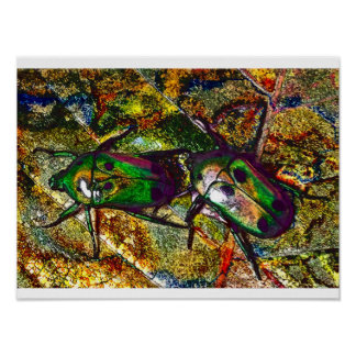 Tropical Rose Chafer Beetle Digital Art Poster