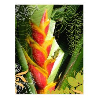 Tropical Salamander Postcard