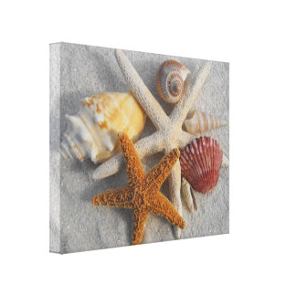 Tropical Seashell/Starfish White Sand Photo Canvas