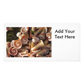 Tropical Seashells Photo Greeting Card