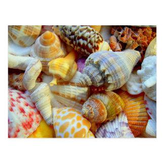 Tropical Seashells Photography Postcards