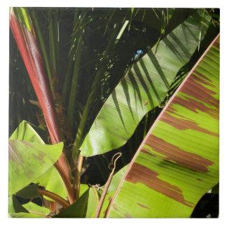 tropical splendor tile