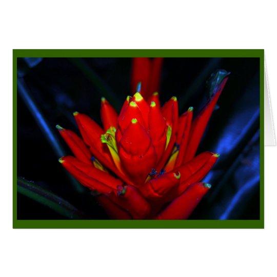 Tropical Still Life Card