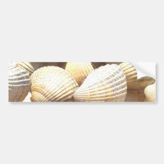 Tropical Sunny Exotic Sea Shells Bumper Sticker