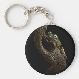 tropical tree frog keychain