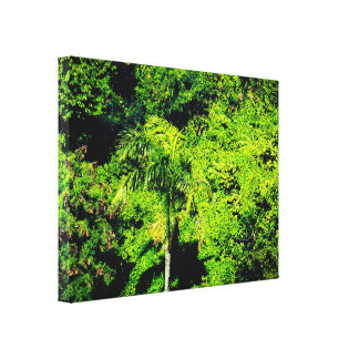 Tropical Trees In The Sunlight Canvas Print