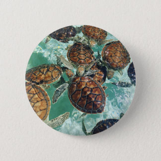 Tropical Turtles (Kimberly Turnbull Photography) 2 Inch Round Button