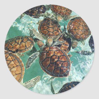 Tropical Turtles (Kimberly Turnbull Photography) Classic Round Sticker