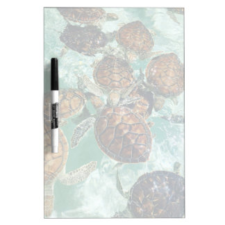 Tropical Turtles (Kimberly Turnbull Photography) Dry Erase Board