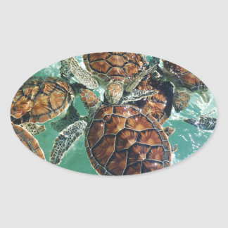 Tropical Turtles (Kimberly Turnbull Photography) Oval Sticker