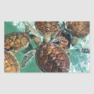Tropical Turtles (Kimberly Turnbull Photography) Sticker