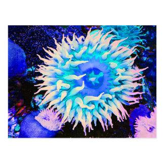 Tropical Undersea Anemone Plant Postcard