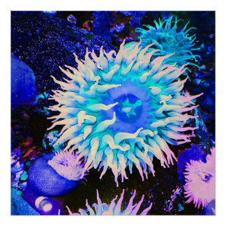 Tropical Undersea Anemone Plant Poster