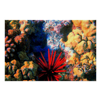 Tropical Undersea Coral Poster