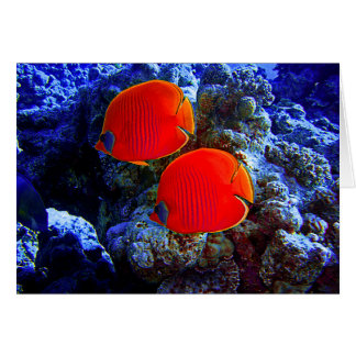 Tropical Undersea Fish Swimming In Coral Card